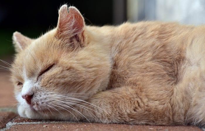 睡眠をしっかりとるイメージ画像
