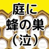【実録】家にアシナガバチの巣が!蜂の巣の駆除業者の選び方や金額交渉はどうすればいいの?