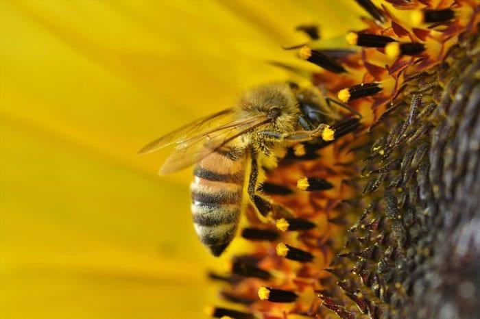 蜂の巣を駆除する業者はどうやって選べばいいのか?のイメージ画像