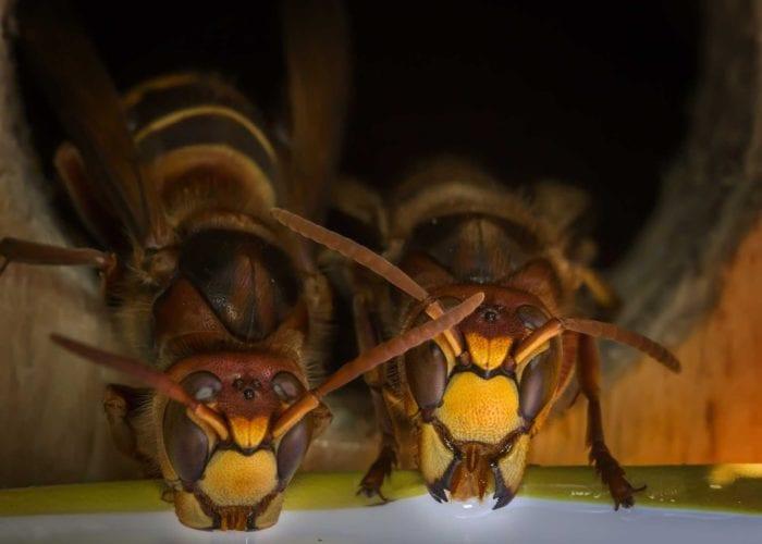 蜂の巣駆除のイメージ画像