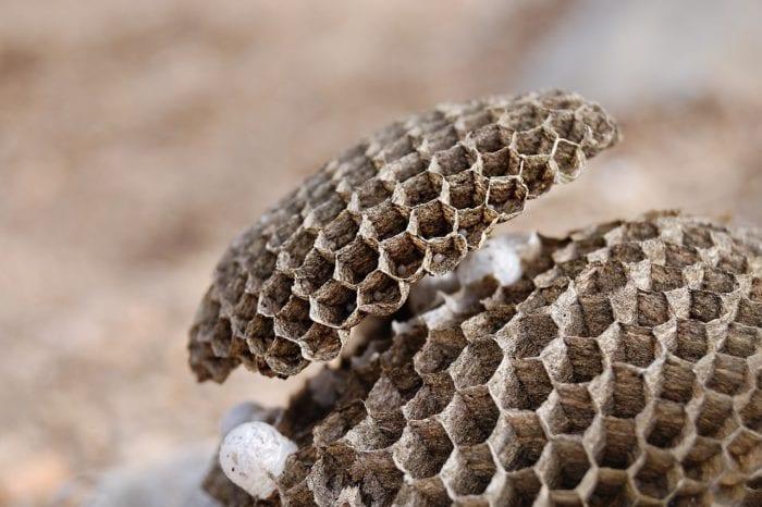 【実録】アシナガバチの駆除&駆除した後のことのイメージ画像