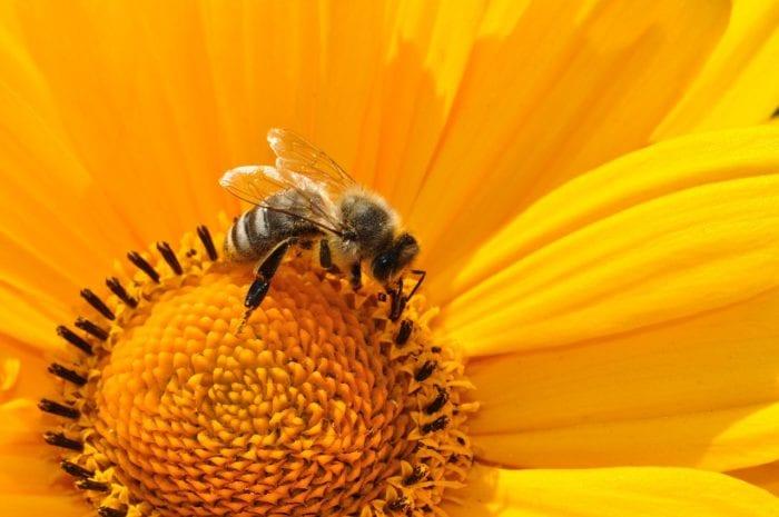 蜂の巣を駆除するなら良心的な費用掲載の「ハチ110番」がおすすめのイメージ画像