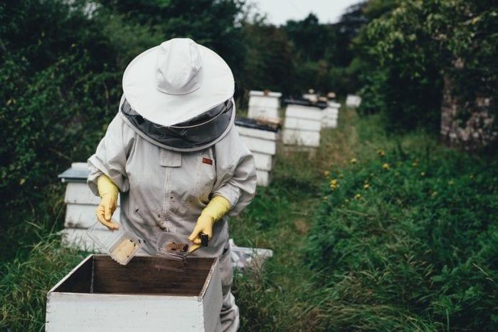 業者さんがスズメバチの巣を駆除するイメージ画像