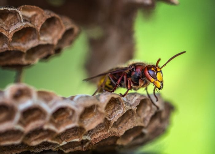 蜂の巣の駆除は業者にまかせよう!のイメージ画像
